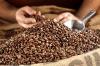 Storia del caffè, sai come viene importato, lavorato e distribuito il caffè in Italia?